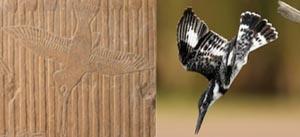 Van diverse pluimage: Vogels in moerrasscenes in Ouderijks privégraven @ Dordrecht
