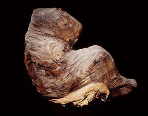 Dierenmummies in het oude Egypte @ Groningen